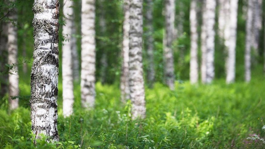 Ympäristöasiat Ympäristösertifikaatit Markkinointi Grano